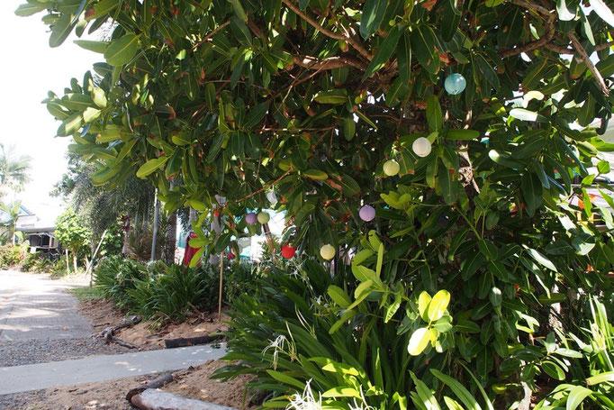 海辺の木がかわいく飾られていました