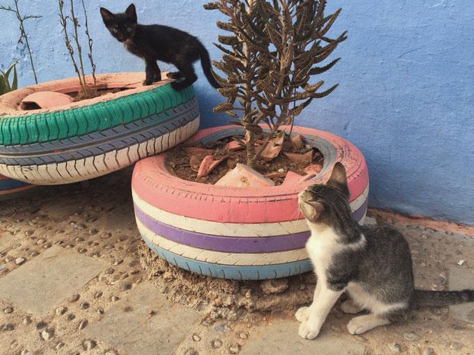 シャウエンの街には猫がたくさん 普段は犬派な私でも見ていて癒されます♡