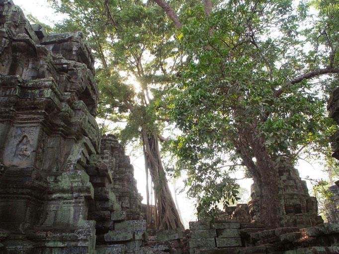 樹木の除去などが行われていないため 遺跡の中には今にも押しつぶされそうなものも
