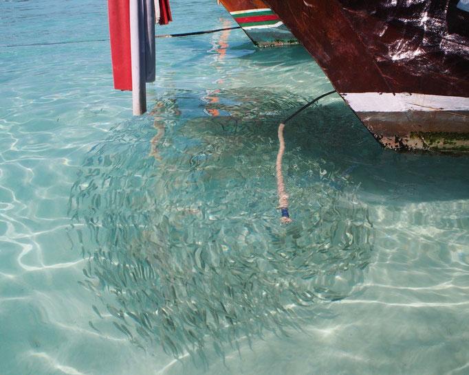 ロングボードの周りにも 小魚がくるくる まるで水玉模様みたいでした