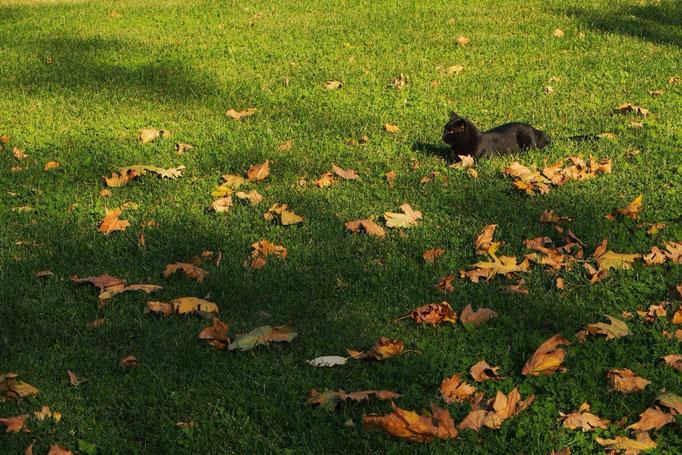 少しのんびり過ごしてモスクの外に出ると 猫が落ち葉の中でごろごろ嬉しそう