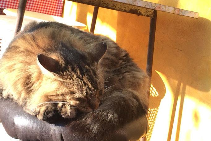 アタカマからバスに乗りビーニャデルマルへ 宿の猫シマさん
