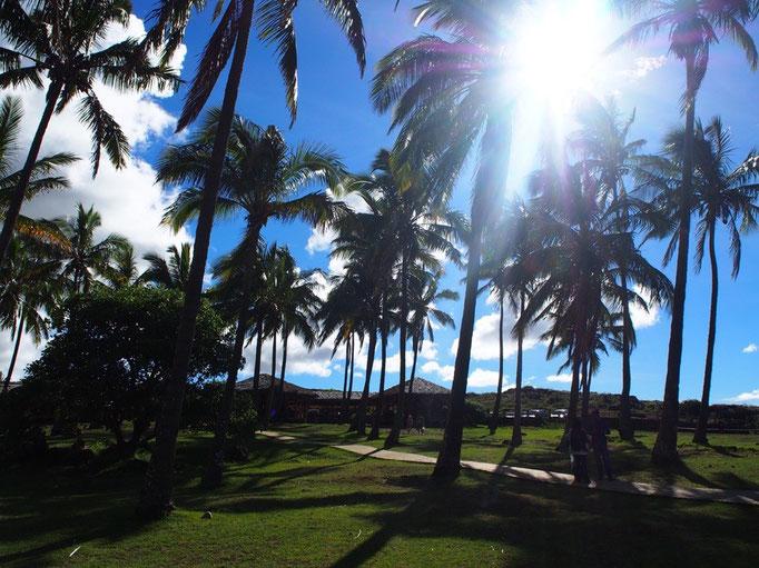 アナケナビーチにはヤシの木もたくさん植えられていて 南国リゾートという雰囲気
