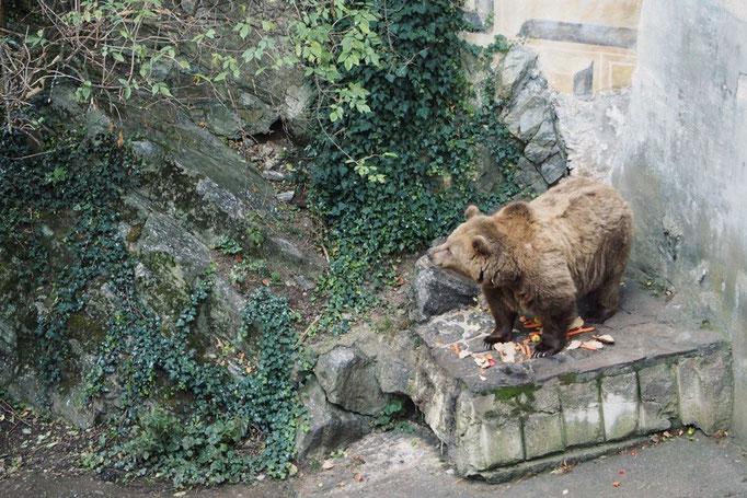 チェスキークルムロフ城ではお堀の中で熊が飼われていて 帰る頃には夕食タイムでした