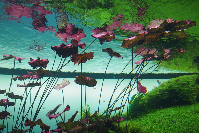 リスボン水族館で行われていた天野尚さんの世界最大のネイチャーアクアリウム