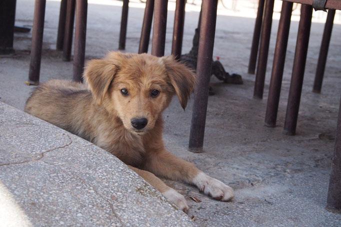 ティネリールのカフェで出会った子犬 今もたくましく生きているといいな
