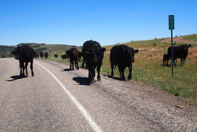 この日の移動中には牛の行列に遭遇 牛が過ぎていくまで車は停まって待機(笑)