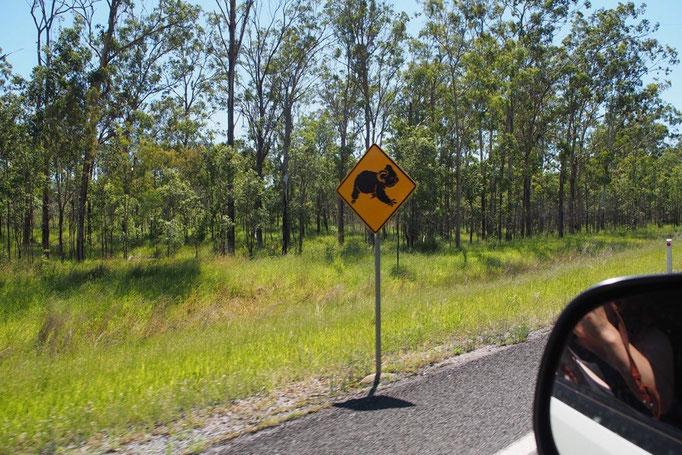 道路にはコアラ カンガルー 牛に注意の看板などなど...いろんな看板が