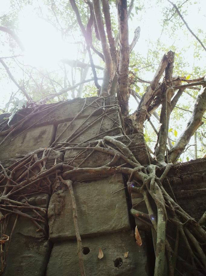 木って ほんとに生き物なんだなぁ...なんて そんな当たり前のことを 実感として感じられる場所
