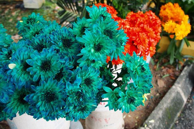 タイ寺院の前で売られていた お供え用のお花 多分 菊の花...カラーが斬新!