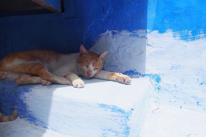 こちらの猫はお昼寝中...ZZZ