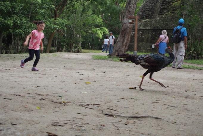 遺跡の中の広場はみんなの憩いの場になっていて 野生の鳥と遊ぶ子どもの姿がかわいい♡