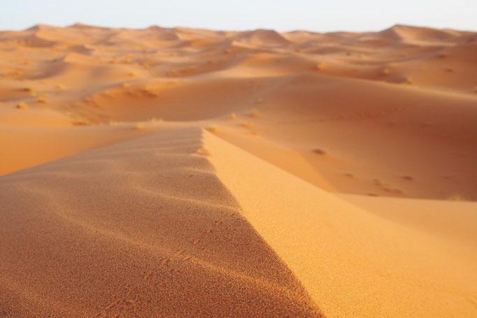 サハラ砂漠の砂は 1粒1粒の粒子が細かくて本当にさらさら
