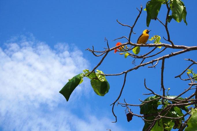 この日はずっと晴天 青い空に緑と黄色い鳥の色が映えて綺麗