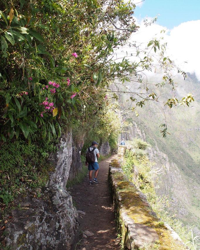 インカの橋へ向かう途中 お花がきれい