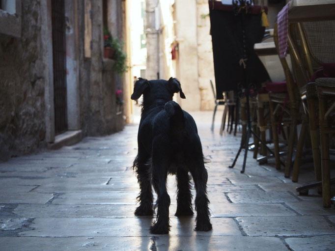 細かい路地を入ると カフェの前で店番をしている こんなけなげなワンコにも出逢えます