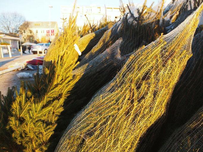 夕日を眺めにお出かけすると 海に行く途中でツリーが売られていました