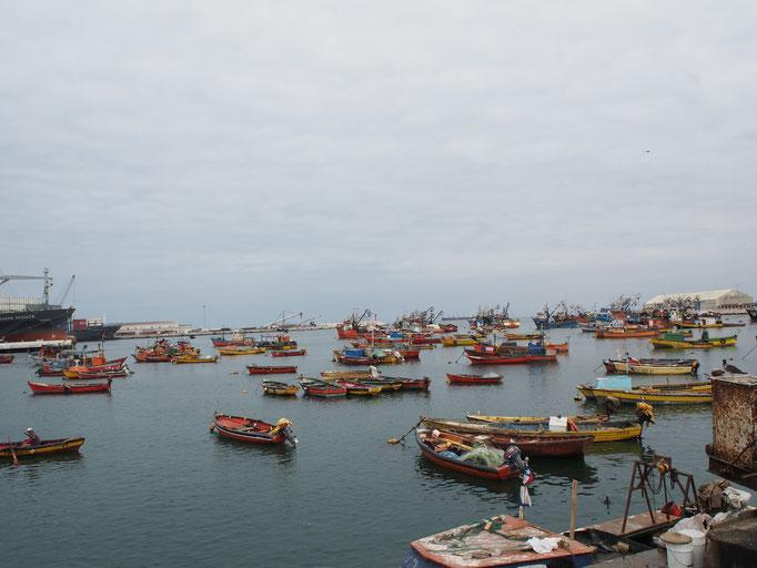ラセレナからバスに乗りアリカへ おいしいシーフードを食べにアリカの魚市場へ