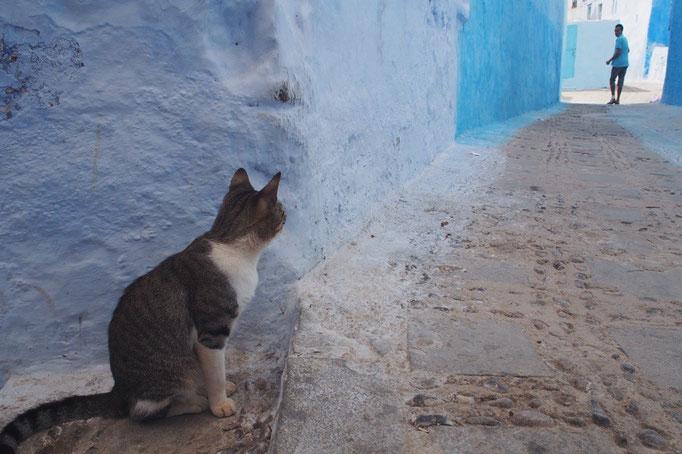 この日は男の子をそっと壁から見守る けなげな猫に出会いました