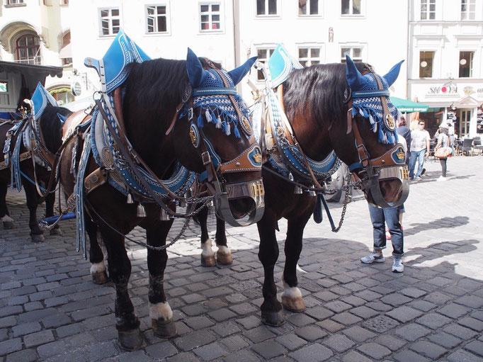 ミュンヘンのホブフロイハウスの前には衣装を身につけた馬が待機中 みんなで写真をパチパチ