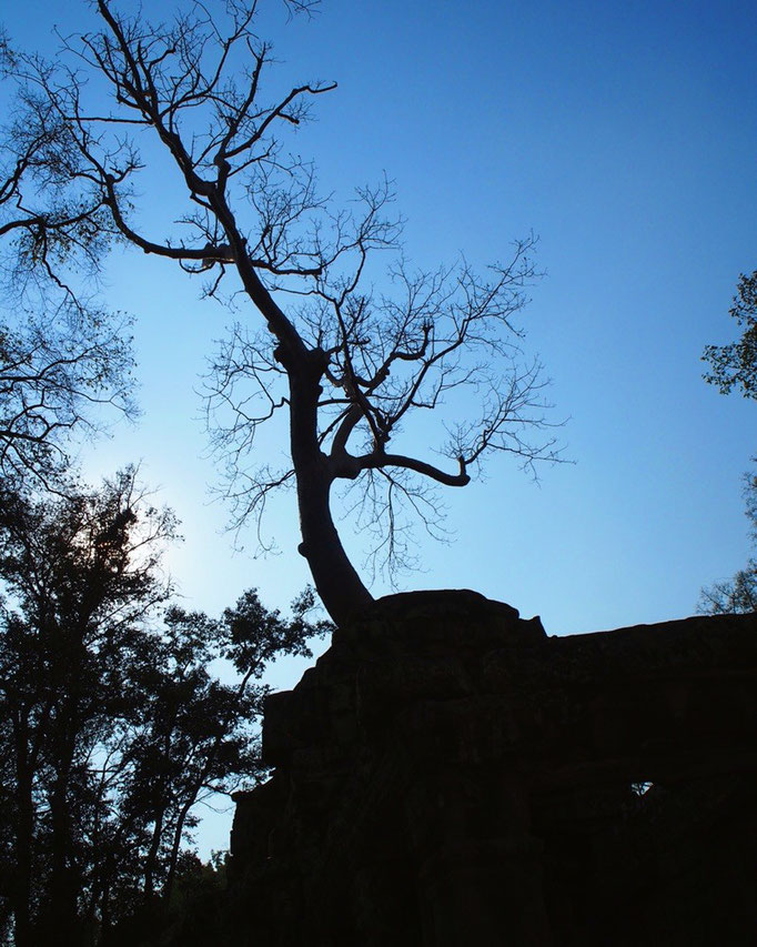 次に訪れたのは うっそうと茂る木々の中に姿をあらわす タプローム