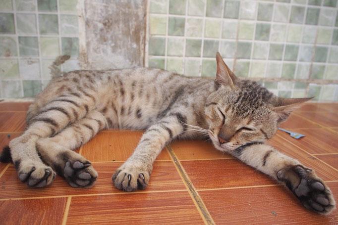 頂上にあるスタウンピーパヤーでは 猫がすやすやお昼寝中...ZZZ