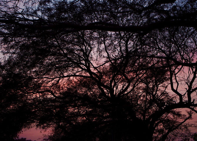 夕日が沈んだ後に見えた空 木の向こうにあらわれた ピンク色のグラデーションがとても綺麗でした