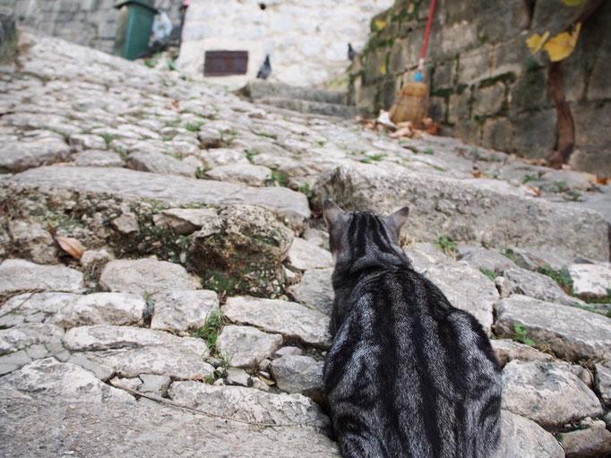 城壁から降ってきたところで鳩を狙う猫に遭遇 じっと待機したのに あっさり逃げられるという...
