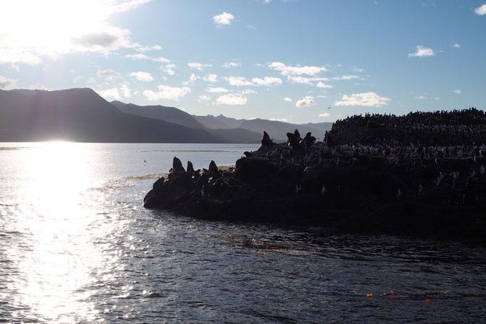 ロスハバロス島に到着 島に何かいるらしいシルエットが...