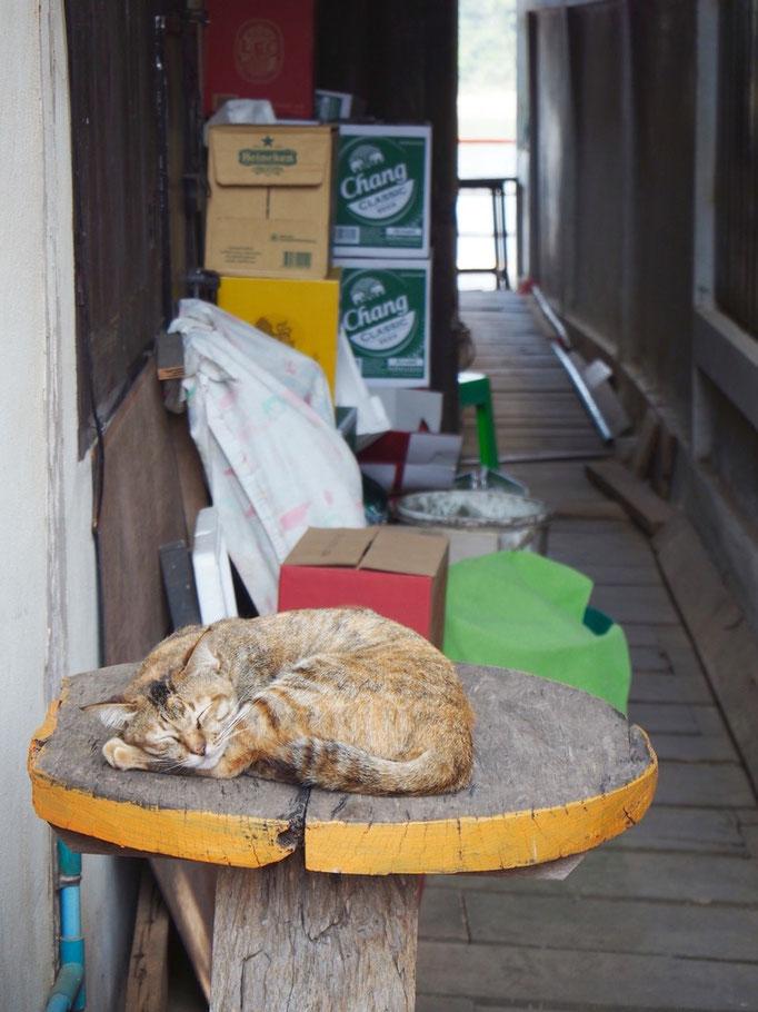 カフェを出ると カフェの外にあるテーブルで猫がお昼寝中