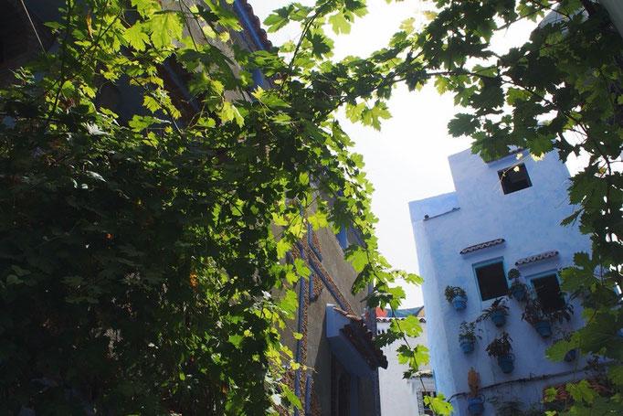 青い街にところどころある緑が映えて綺麗 あとは晴れる日を待つのみ(笑)