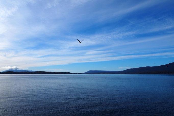 船の横や目の前を鳥が飛んで行ったりして 寒かったけれど動物達のありのままの姿が見られて大満足でした
