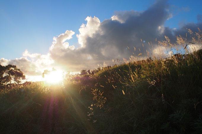 火山湖の周りをぐるりとトレッキング 朝陽が当たって草木も輝いています