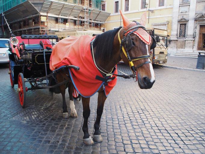 トレヴィの泉へ向かう途中で出会った馬は 帽子とケープを身にまとったおしゃれさん♡