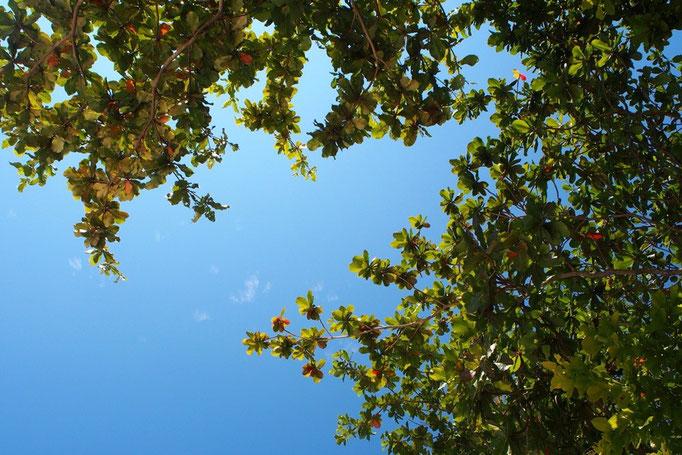 出発日もすっきりとしたお天気  空が真っ青 緑がいきいきしてる