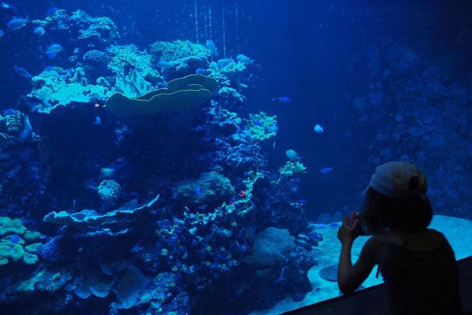 水槽の前でじっと魚を見ている女の子 わくわくする気持ちって いくつになっても大切