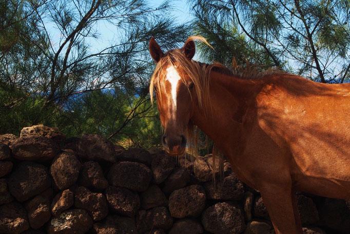ビーチに向かう途中 野馬さんに遭遇