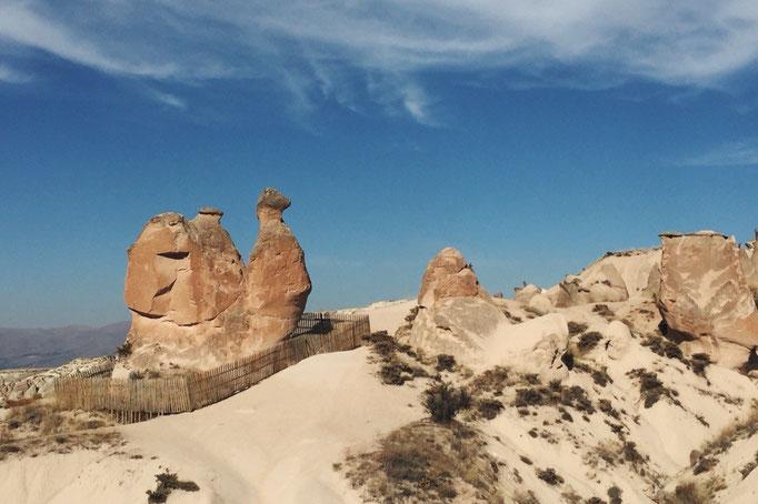 しばらく進むと観えてきたラクダ岩は風や雨の浸食によって 自然にできた岩 自然って不思議