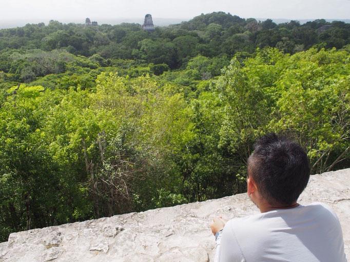 Ⅳ号神殿の高さはなんと70m この高さから眺めるとジャングルの木々の中に神殿の飾り屋根が見えます