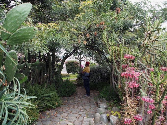 庭園の様子 この他にも鳥たちがきれいな飼育小屋で展示されていたりと充実の内容でした