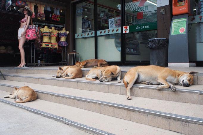 リペ島のセブンの前に いつもいたワンちゃん家族 いつ見ても 暑いからか みんなぐったりでお昼寝中...