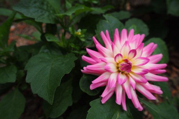 シントラに着いたらペーナ宮殿へ 宮殿の敷地内にはお花がたくさんな場所が♡