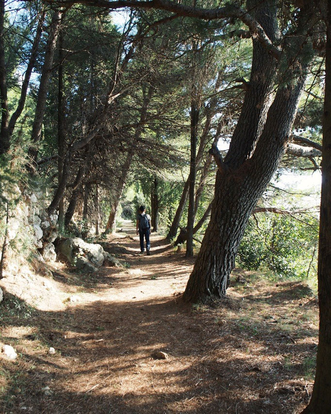 スルジ山の山頂へ向かう遊歩道は とても整っていて 自然を感じながら歩けるから気持ちが良い