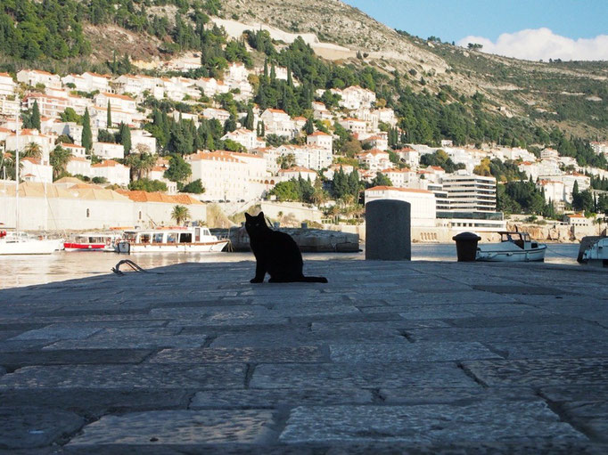 魔女の宅急便や紅の豚のモデルと言われるドブロブニク 旧市街では黒猫のジジに出会いました
