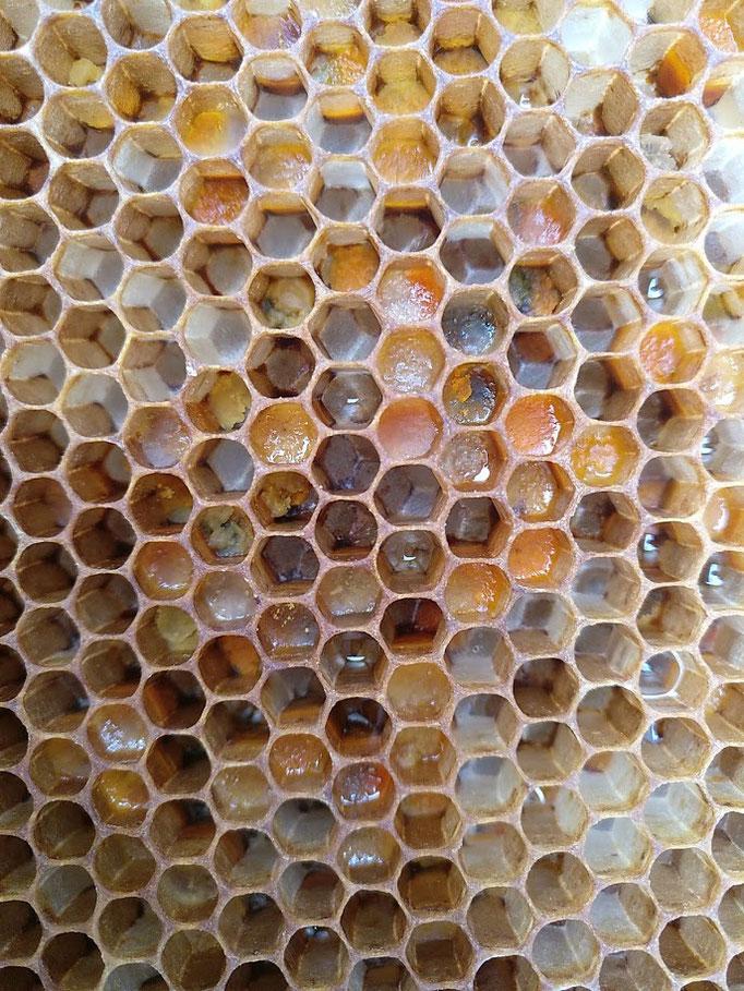 Pollen in verschiedenen Farben