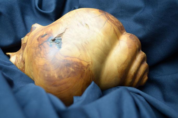 Schneckenmuschel - Olive