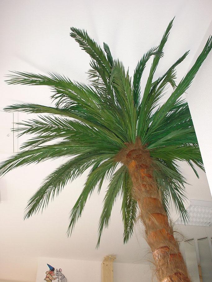 Palmen 3, 4 oder 5 Meter