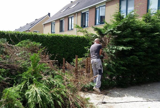Coniferen verwijderen en schutting plaatsen