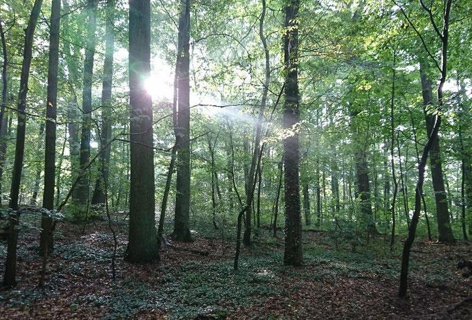 Sonnenschein im Ruhefost Eberswalde