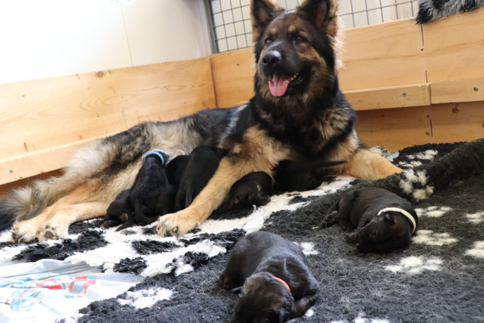 Mama Moon mit den Babys ( 1 Woche alt )